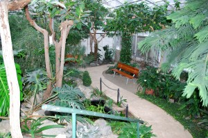 Visit a lush world in Mann Leiser Greenhouse
