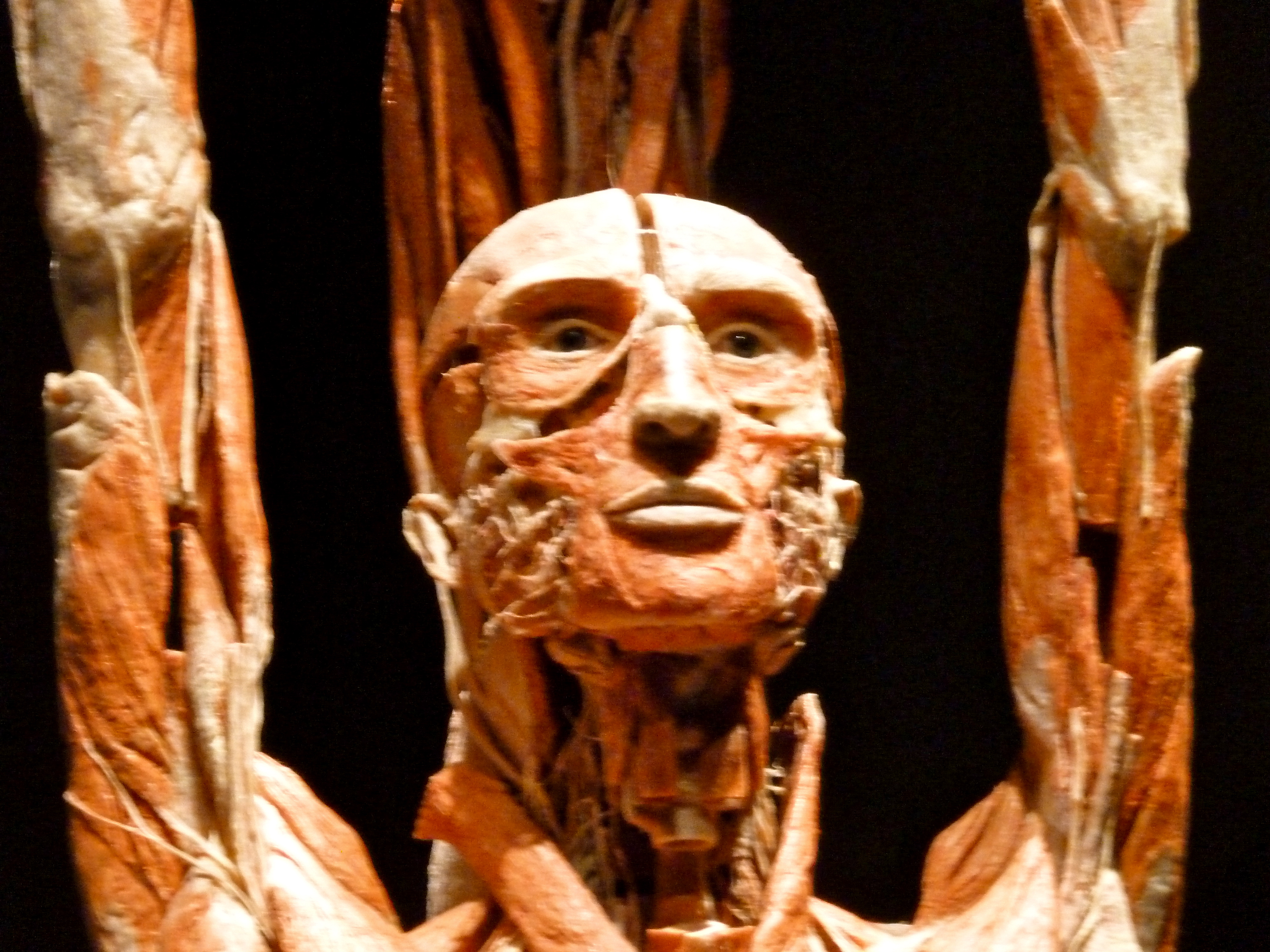 Extra Body Worlds Vital At Anchorage Museum For Parents Ak On The Go