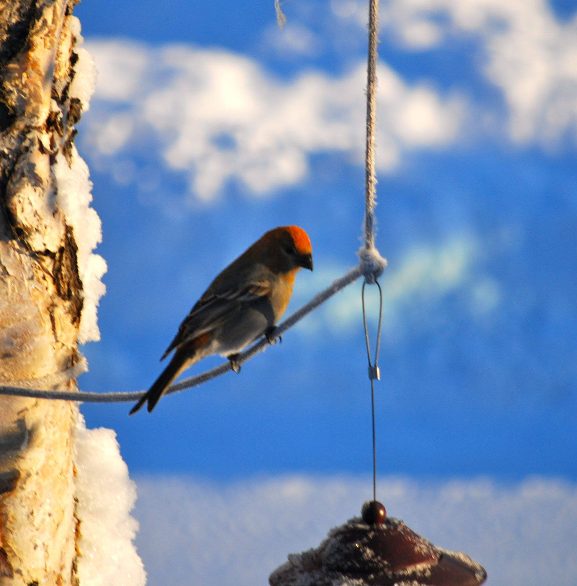 alaska wildlife four great places for winter critter viewing with