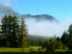 Sitka spruce trees tower over a meadow in Southeast Alaska.