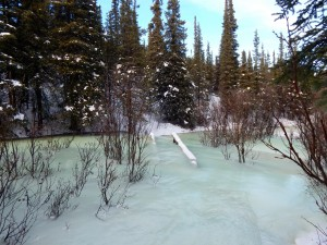 A footbridge almost completely encased in overflow ice along the Taiga Trail. Ask for reroute directions at the visitor center. AKontheGO/Erin Kirkland