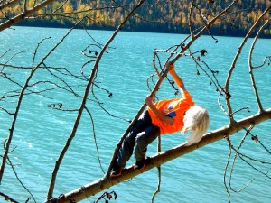 A young hiker finds a downed tree at Eklutna State Park near Anchorage. Erin Kirkland/AKontheGO