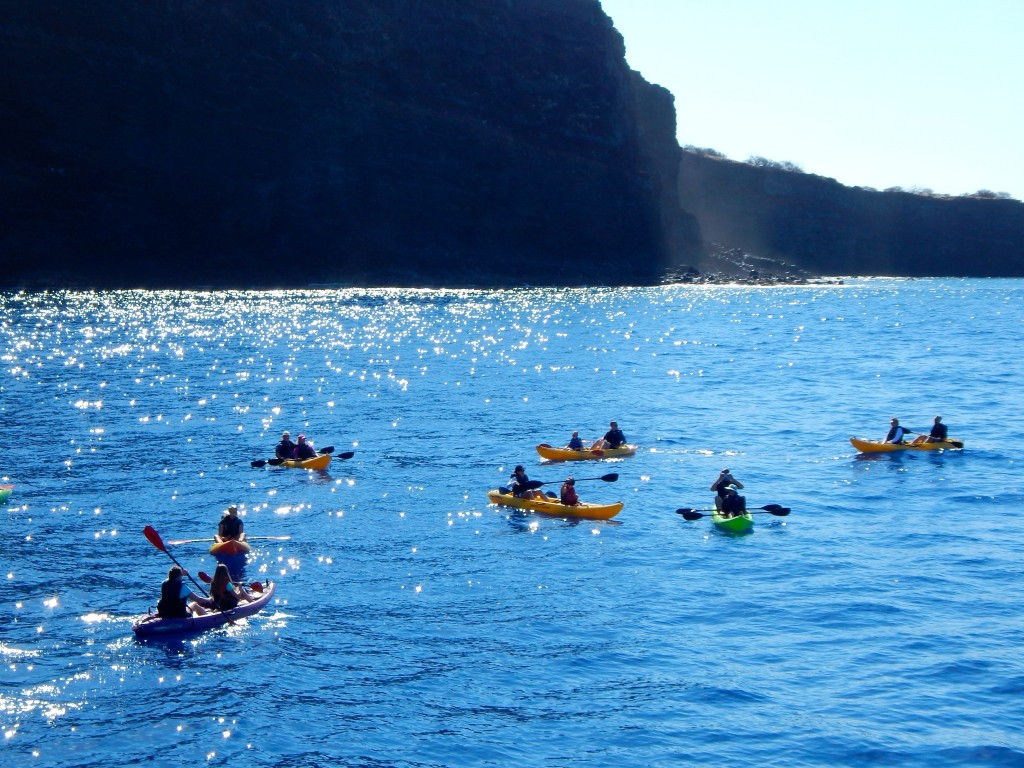 Kayaking the shorelines in search of dolphins, turtles, and other Hawaiian sea creatures. Erin Kirkland/AKontheGO