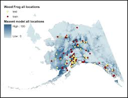 Where do wood frogs live? Just about everywhere in Alaska! You can help track their numbers through the Wood Frog Project! [Image courtesy uaa.alaska.edu}