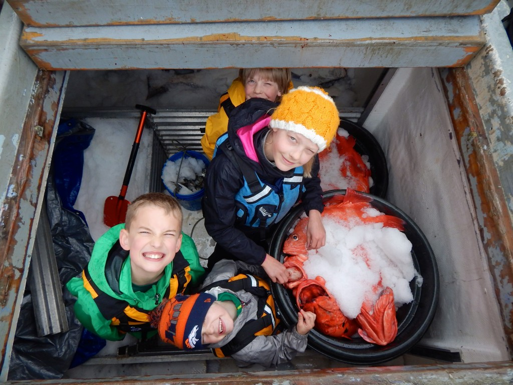 Alaska's fishing families rely upon multiple varieties of seafood harvests. A group of kids explores the hold of the F/V Alexandra and a catch of snapper. Erin Kirkland/AKontheGO