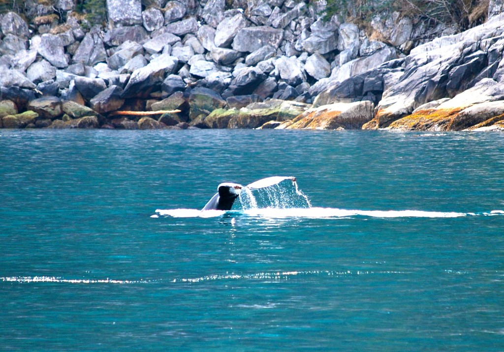 Got whale? Kenai Fjords National Park is full of wondrous things. Erin Kirkland/AKontheGO