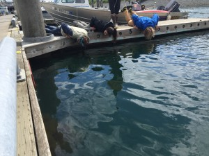The Creatures of the Dock Tour by Center for Alaskan Coastal Studies is an hour of up-close creature features. Bryan Bearss/AKontheGO