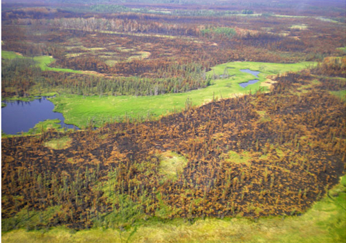 Wildfires, while very scary, can and do provide important ecological impacts for forestland. Image courtesy US Forest Service.