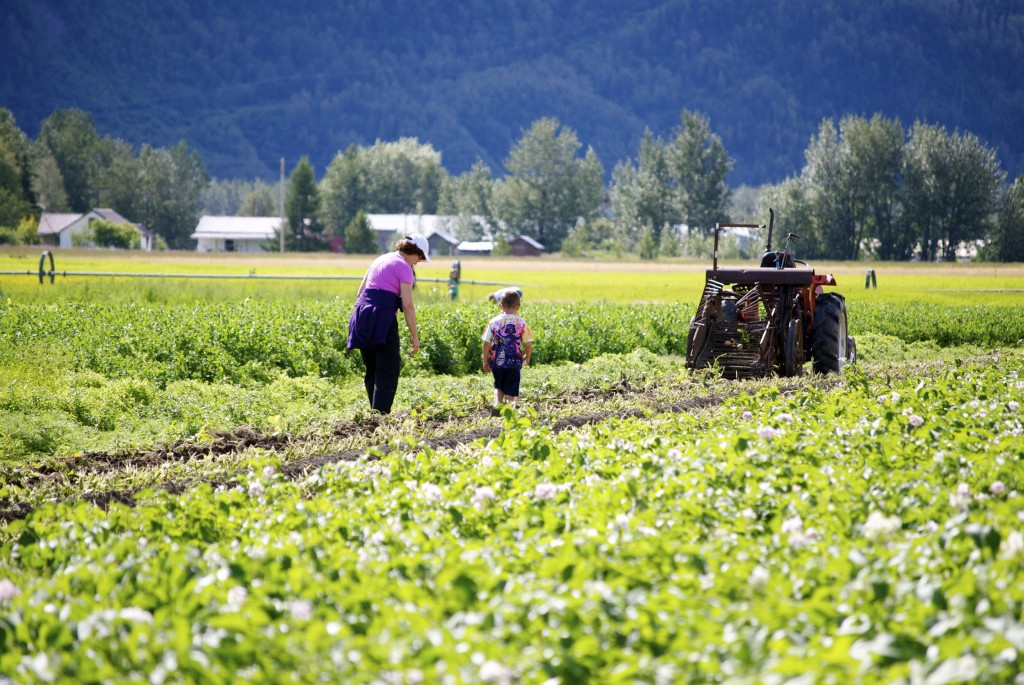 Pyrah's Pioneer Peak Farm is a steadfast Matanuska Susitna Valley favorite of local families. Image by Erin Kirkland/AKontheGO