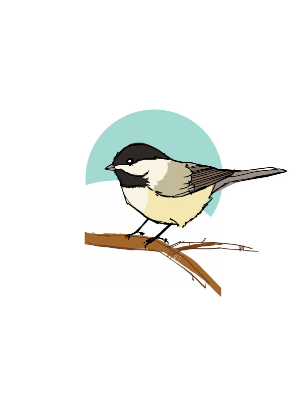 winter.chickadee