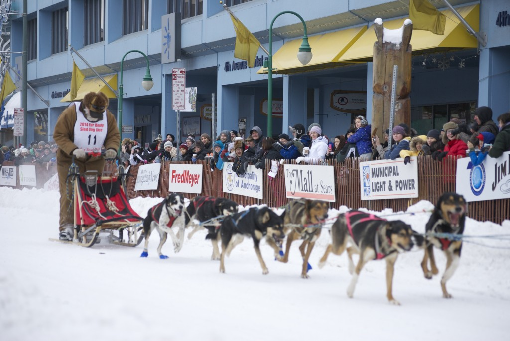 A Fur Rendezvous sprint team departs 4th Avenue in downtown Anchorage in 2014. Erin Kirkland/AKontheGO