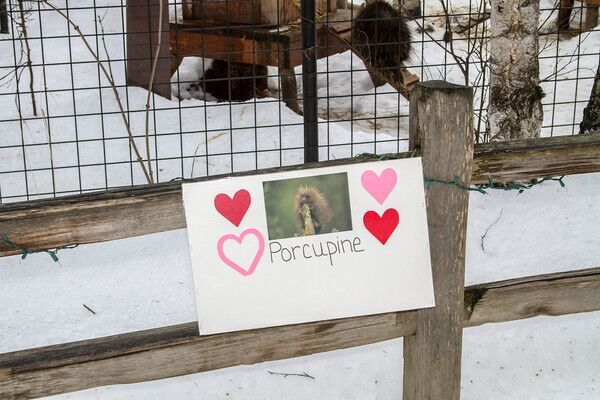 Spend Valentines weekend  at the Alaska Zoo and share the love with animals like this porcupine family.