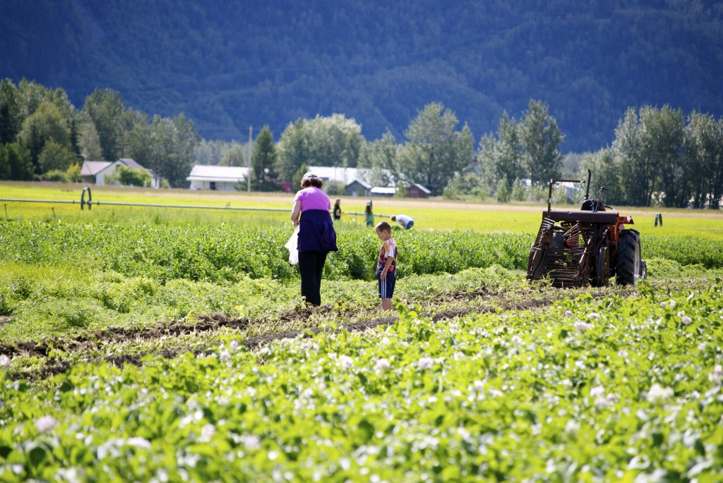 Alaska's farms yield a wealth of produce. Erin Kirkland/AKontheGo