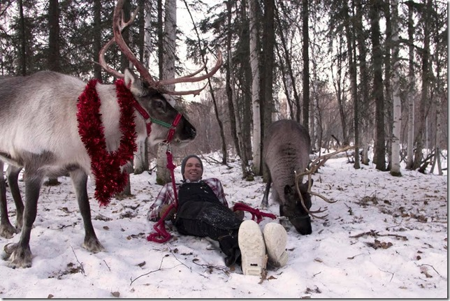 George Aguiar reclines with two of his reindeer. Image courtesy George Aguiar