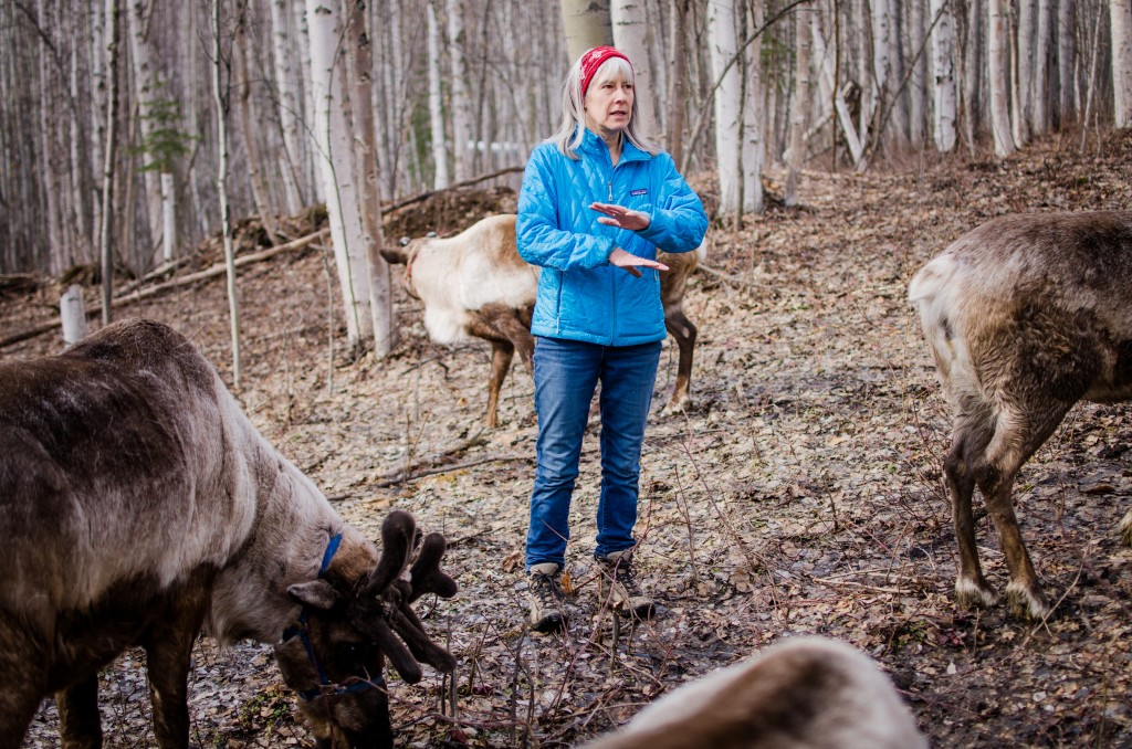 Running Reindeer Ranch owner Jane Atkinson describes the animals' history, physiology, and importance to Alaska during a tour at her ranch in Fairbanks. Photo by Jen Ostler.
