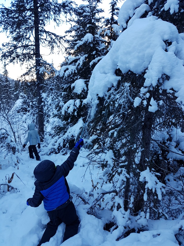 Knocking snow off the trees is always the best part of any Christmas tree adventure. Erin Kirkland/AKontheGO