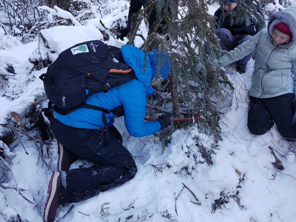 "Be sure to cut as close to the ground as possible, and don't ever ""top"" a tall tree! Erin Kirkland/AKontheGO"