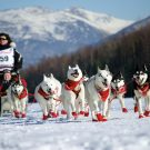 Iditarod 2018: For the kids